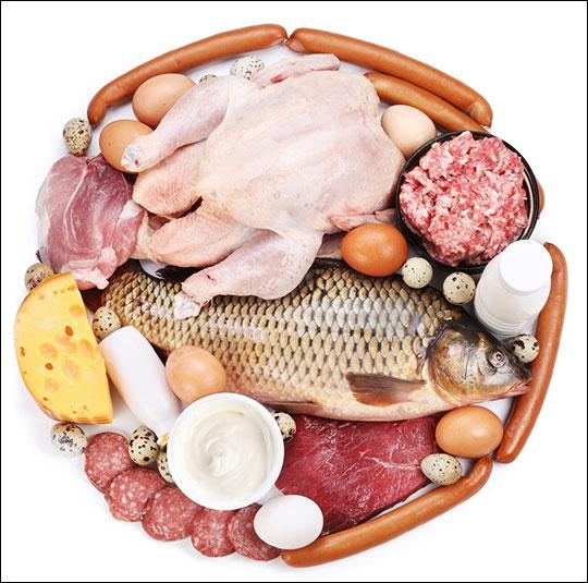 Белковый принцип питания