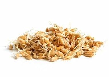 Пророщенная пшеница: польза и целебные свойства