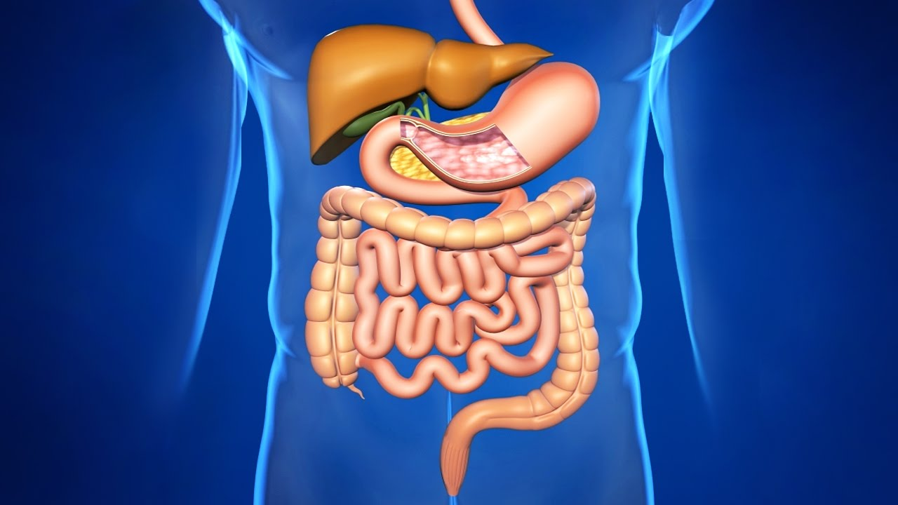 Улучшение работы пищеварительной системы